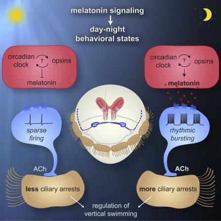 The Evolution of Sleep: 700 Million Years of Melatonin   Amazing Science   Scoop.it