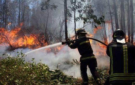 Denuncian que forestales y deficiente plan de prevención son la causa de los incendios   PRL   Scoop.it