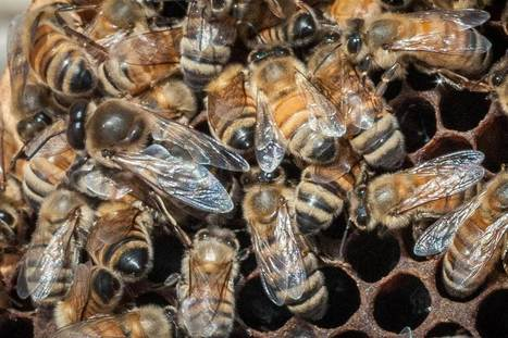More Than 40 Percent of #Bee Hives Died in Past Year: Study #Bees #Bayer #BASF #Monsanto #DuPont | Music | Scoop.it