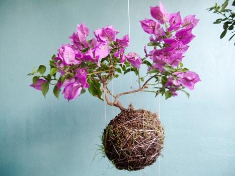 String gardens: Shrubs   Hortense   Scoop.it