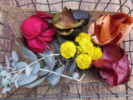 In search of natural hues? A garden 'to dye for' | Natural Soil Nutrients | Scoop.it