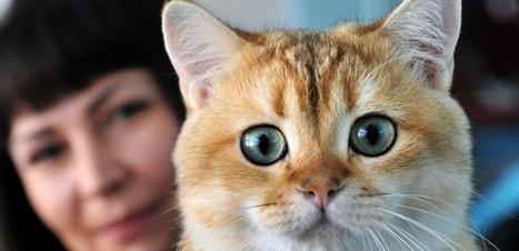 Aspirine, somnifère ou anti-inflammatoire : des médicaments dangereux pour les chats | CaniCatNews-santé | Scoop.it