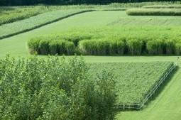 Rethinking Biofuel Yields | Biorenewable Chemicals & Plastics | Scoop.it