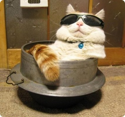 Cool cats! | Funny and crazy cats | Scoop.it