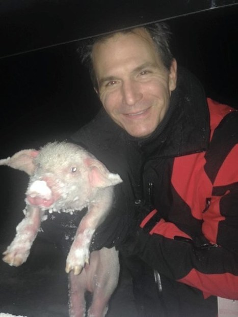 Family Saves Roadside Piglet from Freezing to Death in Blizzard | Care2 Causes | This Gives Me Hope | Scoop.it