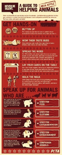 A Guide To Helping Animals: PETA Style [INFOGRAPHIC] | INFOGRAPHICS | Scoop.it