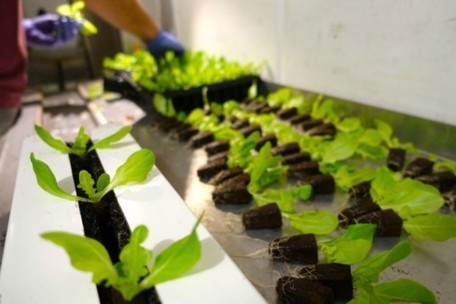 Stony Brook's new hydroponic 'Freight Farm' can grow up to 1,200 lettuce heads a week right on campus | 21st Century Craft & Pride | Scoop.it