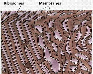 Cell Structures and Their Functions | Biology | Scoop.it