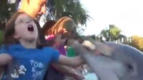 CAUGHT ON VIDEO: 8-year-old girl bit by dolphin at SeaWorld in Orlando, Florida | The Billy Pulpit | Scoop.it