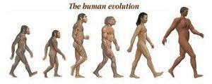 ANIMACIÓN FLASH, EL PROCESO DE HOMINIZACIÓN, CRONOLOGÍA DE LA EVOLUCIÓN HUMANA