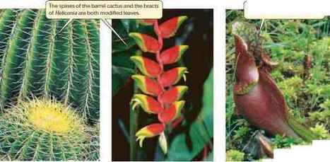 Phylogenetic Trees Plasma Membrane | Plant Genomics | Scoop.it
