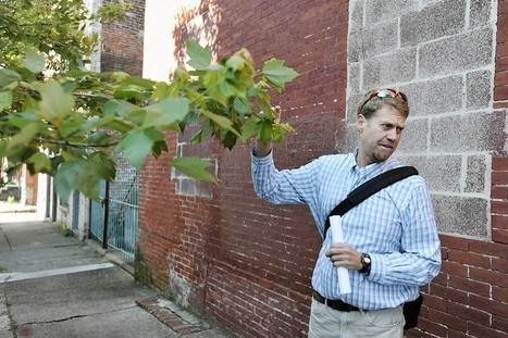 Trees linked to less crime, research finds | It's All Social | Scoop.it