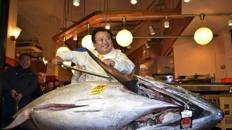 Giant Tuna Sells for Record $1.8 Million - weather.com | All about water, the oceans, environmental issues | Scoop.it