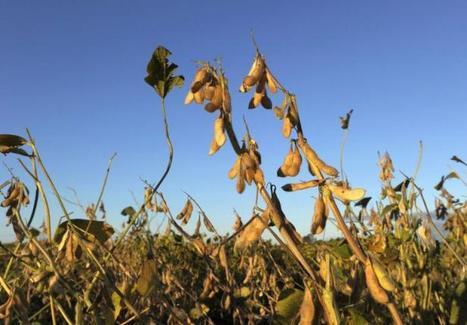 Argentine: premier procès de pesticides causant tumeurs et malformations   Des 4 coins du monde   Scoop.it