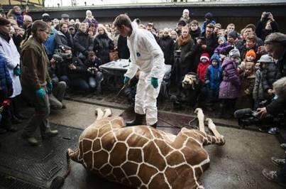 Danes defend zoo's killing of giraffe - gulfnews.com | Zoos should not exist | Scoop.it