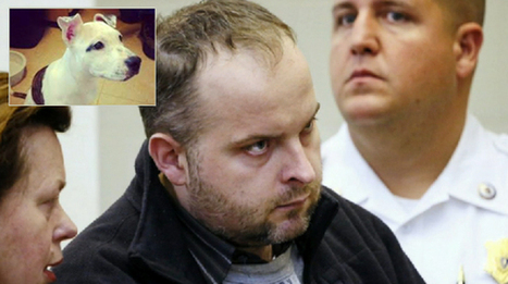 animal abuse charged person with $500,000 and 55 years in jail | Pet Sitter Picks | Scoop.it
