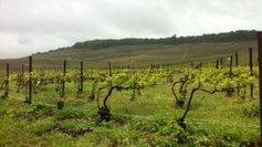 Régulation des droits de plantation: bataille gagnée  - France 3 Champagne-Ardenne | Champagne Actu | Scoop.it