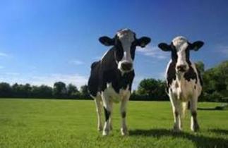 Αγροτικές Ειδήσεις: Ενδυναμωμένη η κτηνοτροφία στη νέα ΚΑΠ   agrocapital   Scoop.it