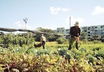 Havana: World Capital of Urban Farming? | Gardening in the City | Scoop.it