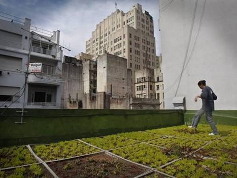 PANAMÁ - LA ESTRELLA ONLINE: Azoteas verdes imponen la moda [Nacional] | Cultivos Hidropónicos | Scoop.it