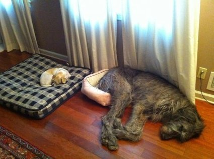 I guess I'll just sleep over here then... | Best Flea Treatment for Dogs | Scoop.it