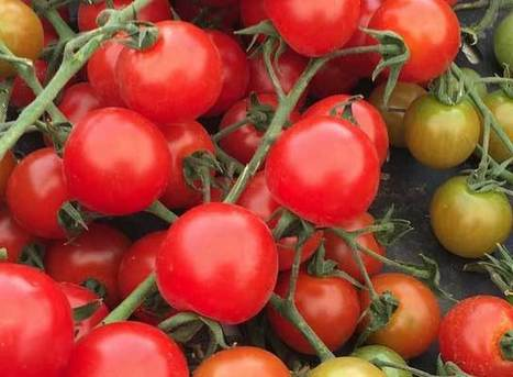 Farm to Fork Brought to You by Yavapai County Supervisors   CALS in the News   Scoop.it
