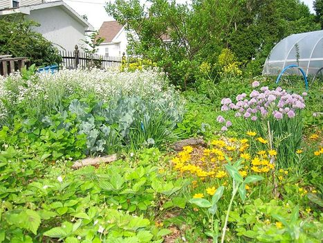 Paradise Lot: How Two Plant Geeks Grew a Permaculture Oasis - Organic Connections | Environmental Innovation | Scoop.it