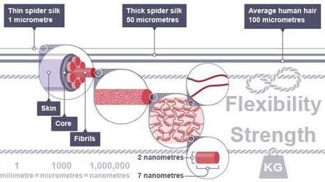 Pourquoi les scientifiques veulent fabriquer de la soie d'araignée? | EntomoNews | Scoop.it