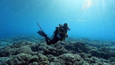 Vidéo Full HD | Polynésie : plongée dérivante à Fakarava ! | Plongeurs.TV | Scoop.it