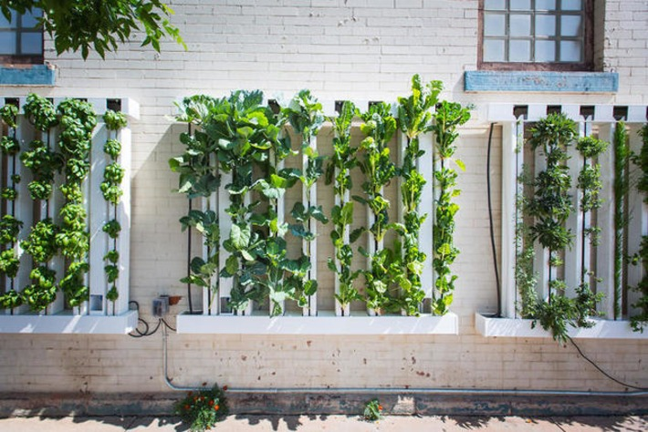 These Vertical Farms Turn Unused City Wall Space Into Gardens That Grow Your Lunch | Almere Groene Stad | Scoop.it