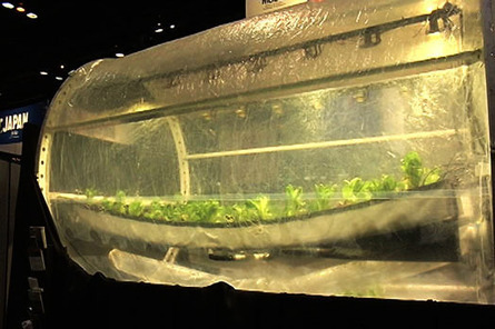 Lunar Greenhouse: Eating salad in space or growing it on Earth | Medill Reports | CALS in the News | Scoop.it