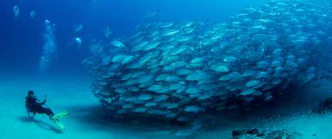 Photo Essay: Once Barren, a Protected Reef in Mexico Now Teems with Huge Fish | Baja California | Scoop.it
