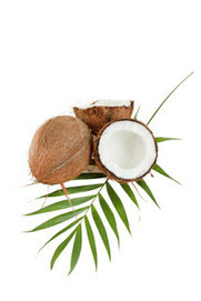 The Life Extension Blog: Can Coconut Oil Combat Tooth Decay? | Health and Nutrition | Scoop.it