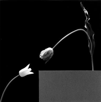 ARTKERNEL » Robert Mappelthorpe / Fondazione Forma per la Fotografia, Milano | Fotografia Italiana | Scoop.it