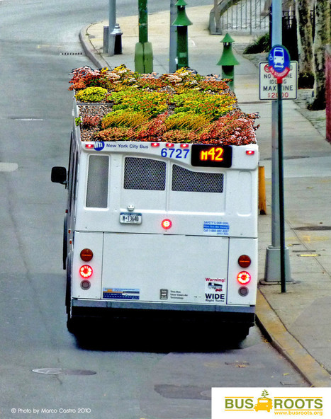 A New York, on plante ses salades sur le toit des bus | Lumières de la Ville | Nature en Ville | Scoop.it