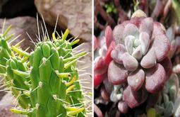 Ja és estiu... i què en fem de les plantes? | EL RACÓ DE LA JARDINERIA | Scoop.it