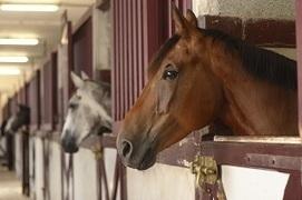 Prebiotics and Probiotics Benefit Equine Gastrointestinal Health | Horse Health | Scoop.it