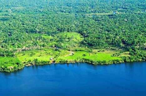 Facts about Rainforest   EFACT   Scoop.it
