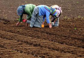 Día Internacional de las Mujeres Rurales - 15 de octubre 2013 | Genera Igualdad | Scoop.it
