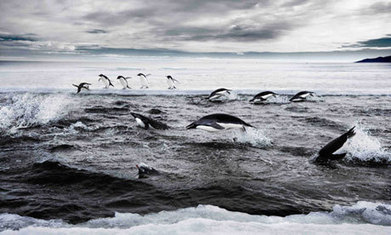 #Russia and #Ukraine likely to block huge Antarctic marine reserve again #greed over #people #UP #oil | Messenger for mother Earth | Scoop.it