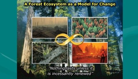 Changing Our Models of Change | Self-organizing and Systems Mapping | Scoop.it