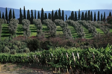 Tuscany: 300 years on and it is still evolving | Vitabella Wine Daily Gossip | Scoop.it
