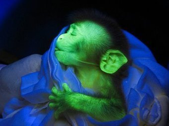 Glowing animals - Monkey, dog, cat and many others | Amazing Science | Scoop.it
