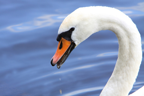 OXFORDPROSPECT - Black Swans Bring New Challenges to Energy Leadership | Oxford Leadership | Scoop.it