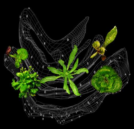 Tieteen rakkikoira: Tutkijat tunnistivat geenin vaimentamiseen ...   Bilsa   Scoop.it