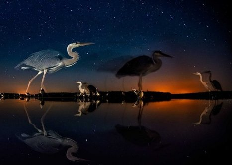 Unbelievable Wildlife Pictures From London's Photographer Competition Of The Year | For Curious minds | Scoop.it