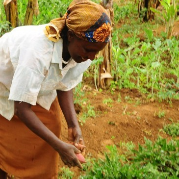 Climate compatible agriculture – a smart approach to poverty ... | Agriculture and Climate Change | Scoop.it