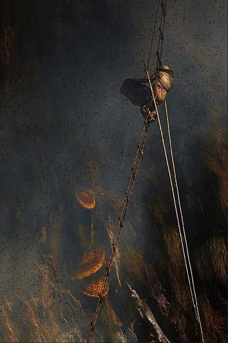 Apiculteurs de l'Extrême dans les Montagnes de l'Himalaya par Andrew Newey | Sustain Our Earth | Scoop.it