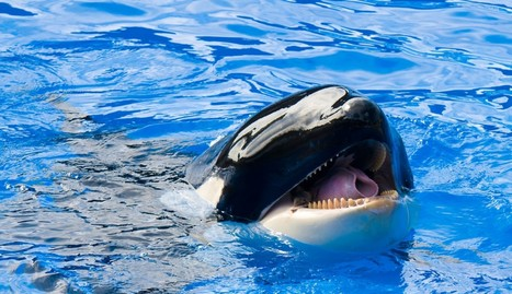 SeaWorld's New Twitter Campaign Backfires In Most Spectacular Way | Oceans and Wildlife | Scoop.it
