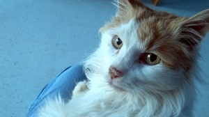 When Animals Love Us Back : NPR | Pet News | Scoop.it
